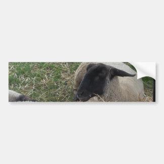 Der Piepmatz und die Schafe Autoaufkleber