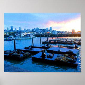 Der San Francisco Pier-39 Plakat Seelöwe-#5-1