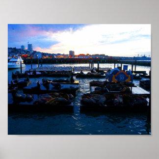 Der San Francisco Pier-39 Plakat Seelöwe-#6-1