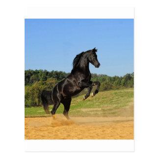 Der schwarze Stallion Postkarte