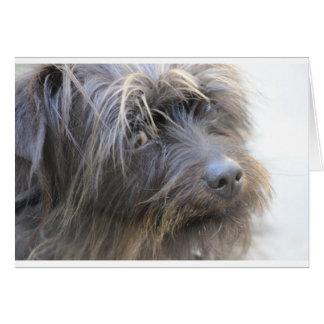 Der Shiggy Hund Karte
