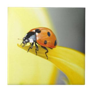 Der sieben Stellen-Marienkäfer macht einen Keramikfliese