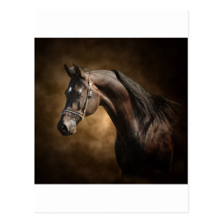 Der Stallion Postkarte