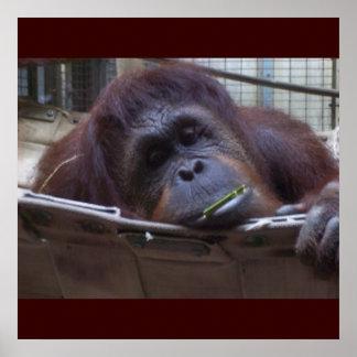 Der traurige Affe Poster