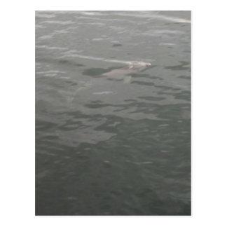 der unsichtbare Delphin Postkarte