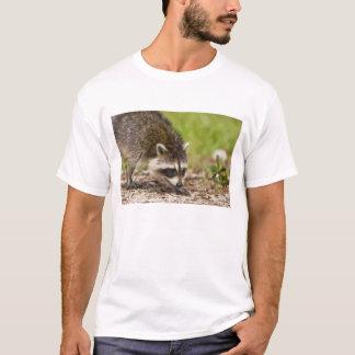 Der Waschbär, Procyon lotor, ist, 4 ein weit T-Shirt