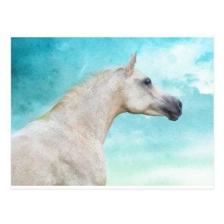 Der weiße Stallion Postkarten
