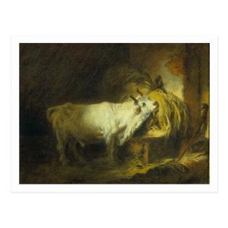 Der weiße Stier im stabilen (Öl auf Leinwand) Postkarte