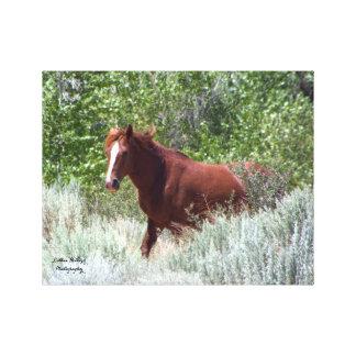 Der wilde Stallion Leinwanddruck