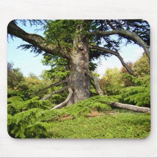 Der Zeder-von-Libanon Baum Moue Matte Mousepad
