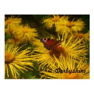 Derbyshire-Schmetterlings-Postkarte Postkarte