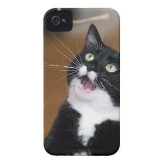 Derpy Katze, die ein albernes Gesicht macht iPhone 4 Cover