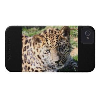 Des niedlichen mutiger Kasten Foto-BlackBerry des iPhone 4 Hülle