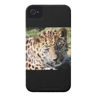 Des niedlichen mutiger Kasten Foto-BlackBerry des iPhone 4 Etuis