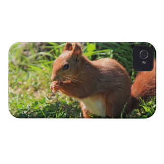 Des roten niedlichen mutiger Kasten iPhone 4 Cover