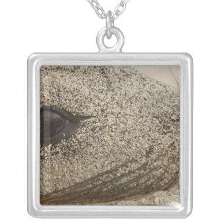 Detail eines Galapagos-Seelöwe Zalophus Versilberte Kette