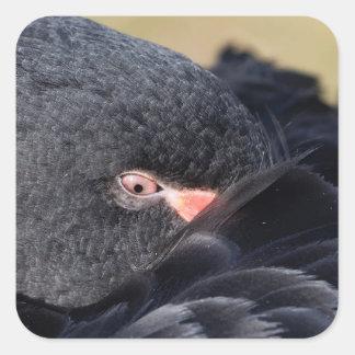 Detail eines schwarzen Schwans Schlafens (Cygnus Quadratischer Aufkleber