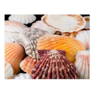 Detail von Seashells aus der ganzen Welt 2 Postkarte