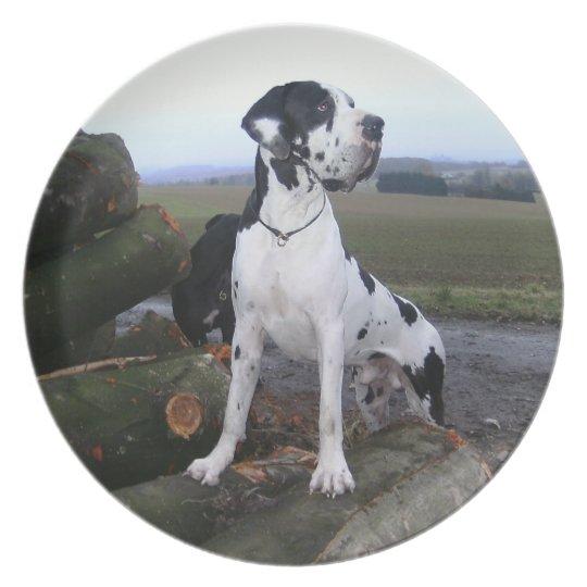 Deutsche Dogge, Great Dane,Hunde,Dogue Allemand Teller