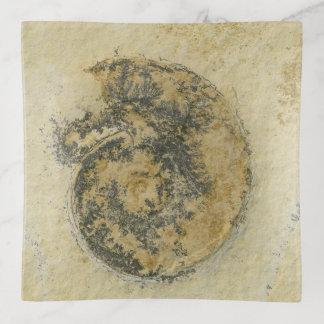 Deutscher Ammonit mit Dendriten Dekoschale