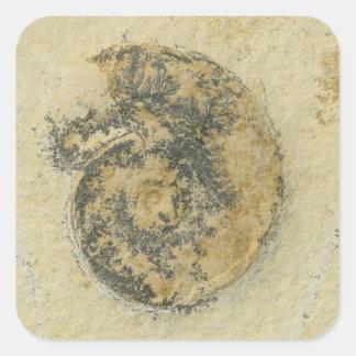 Deutscher Ammonit mit Dendriten Quadratischer Aufkleber