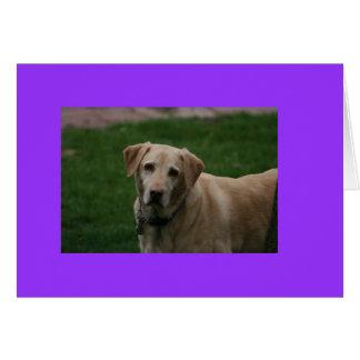 Dewey-Hund Karte