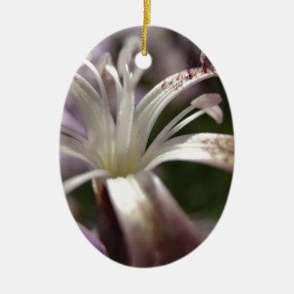Dianthus superbus ovales keramik ornament