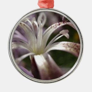 Dianthus superbus rundes silberfarbenes ornament