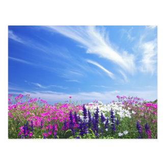 Dianthus und Salvia Blumen Postkarte