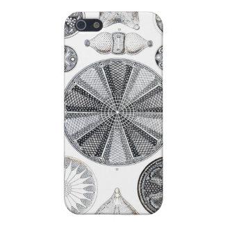 Diatomee iphone 4 Fall Etui Fürs iPhone 5
