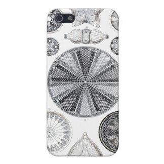 Diatomee iphone 4 Fall Schutzhülle Fürs iPhone 5