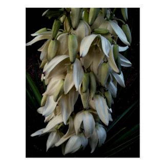 Die Agaven-Blume Postkarte