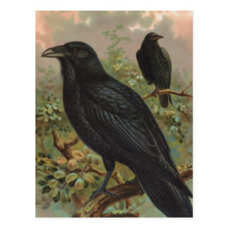 Die allgemeiner Raben-Vintage Vogel-Illustration Postkarte