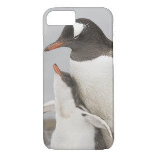 Die Antarktis, Aitcho Insel. Gentoo Pinguinküken iPhone 8/7 Hülle