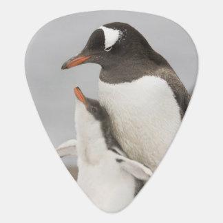 Die Antarktis, Aitcho Insel. Gentoo Pinguinküken Plektron
