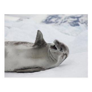 Die Antarktis, antarktische Halbinsel, Antarktis 2 Postkarte