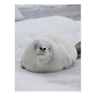Die Antarktis, antarktische Halbinsel, antarktisch Postkarte