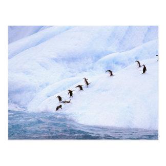 Die Antarktis, antarktische Halbinsel. Chinstrap Postkarte