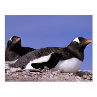 Die Antarktis, antarktische Halbinsel, Peterman Postkarte