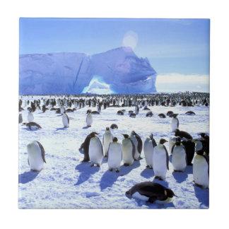 Die Antarktis, antarktische Halbinsel, Weddell Fliese