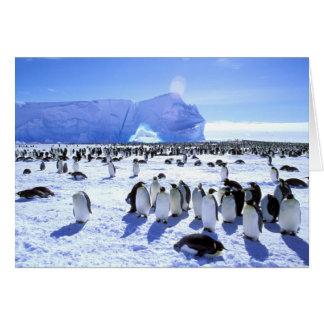 Die Antarktis, antarktische Halbinsel, Weddell Karte
