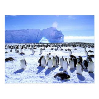 Die Antarktis, antarktische Halbinsel, Weddell Postkarte