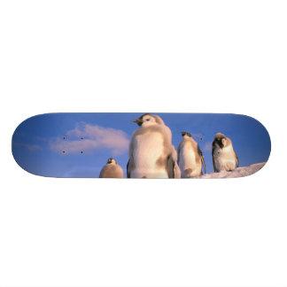 Die Antarktis, australisches antarktisches Gebiet, 20,6 Cm Skateboard Deck