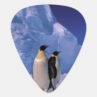 Die Antarktis, australisches antarktisches Gebiet, Plektrum