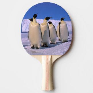 Die Antarktis, australisches antarktisches Gebiet, Tischtennis Schläger