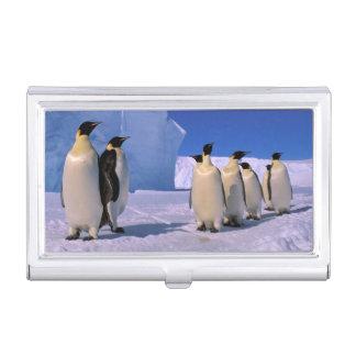 Die Antarktis, australisches antarktisches Gebiet, Visitenkarten Dose