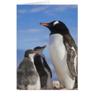 Die Antarktis, Neko Bucht (Hafen). Gentoo Pinguin Karte