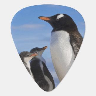 Die Antarktis, Neko Bucht (Hafen). Gentoo Pinguin Plektrum