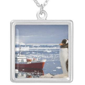 Die Antarktis, Neko Bucht (Hafen). Gentoo Pinguin Versilberte Kette