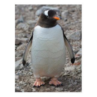 Die Antarktis. Neko Hafen. Gentoo Pinguin 2 Postkarte